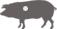 Iberian Pork Fore Loin